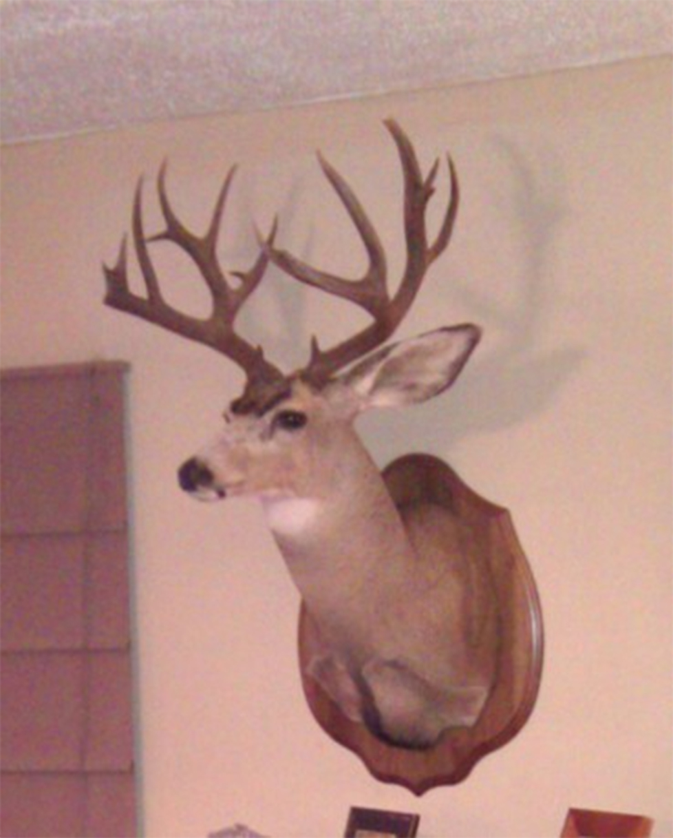 deer mount_crop