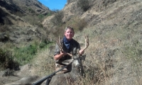 rc deer_crop